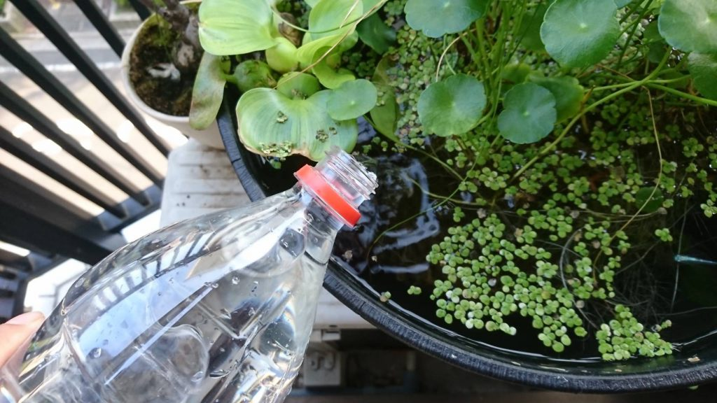 水換えや水足しにはペットボトルを使っています