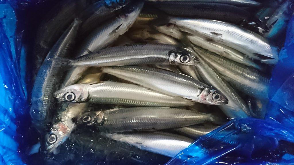 ウルメイワシの鮮魚。目がキレイです