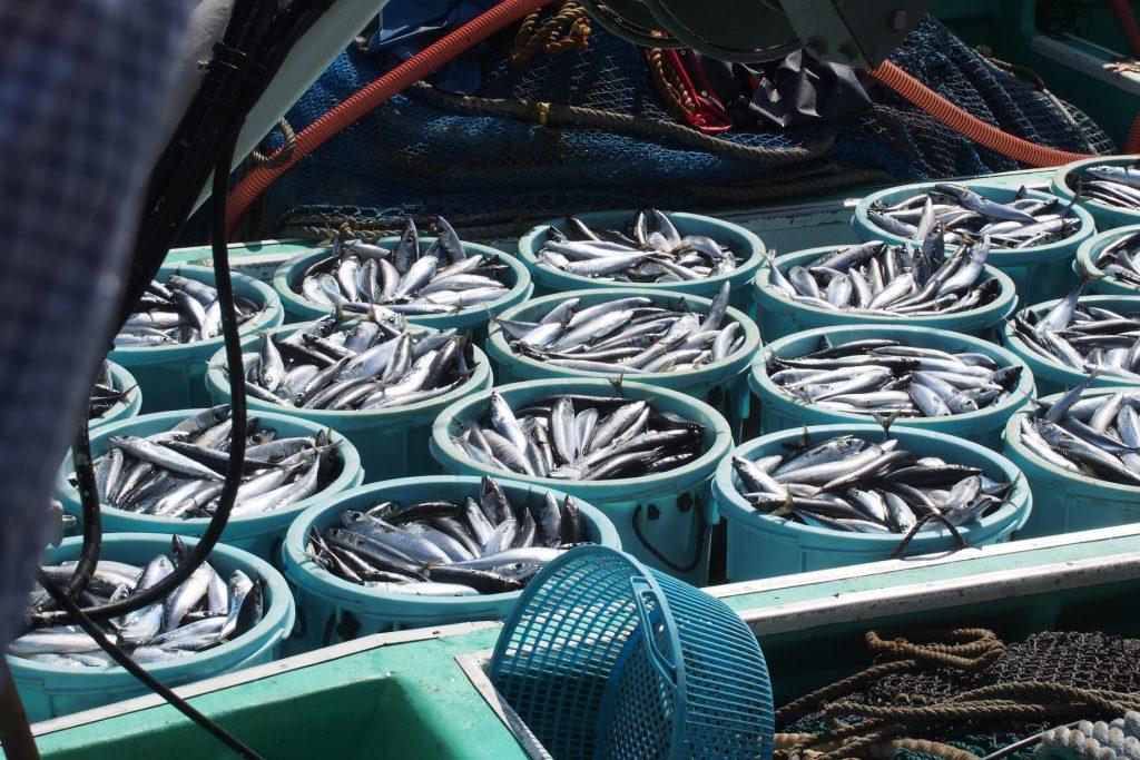 九十九里や銚子港の水揚げイメージ