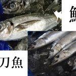 日本の大衆魚『アジ』と秋の味覚『サンマ』/味や特徴の違いを解説します