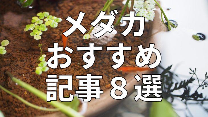 メダカおすすめ記事8選