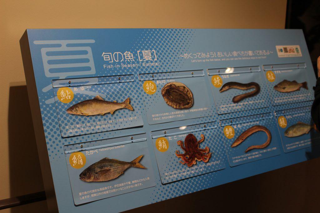 旬の魚の紹介展示