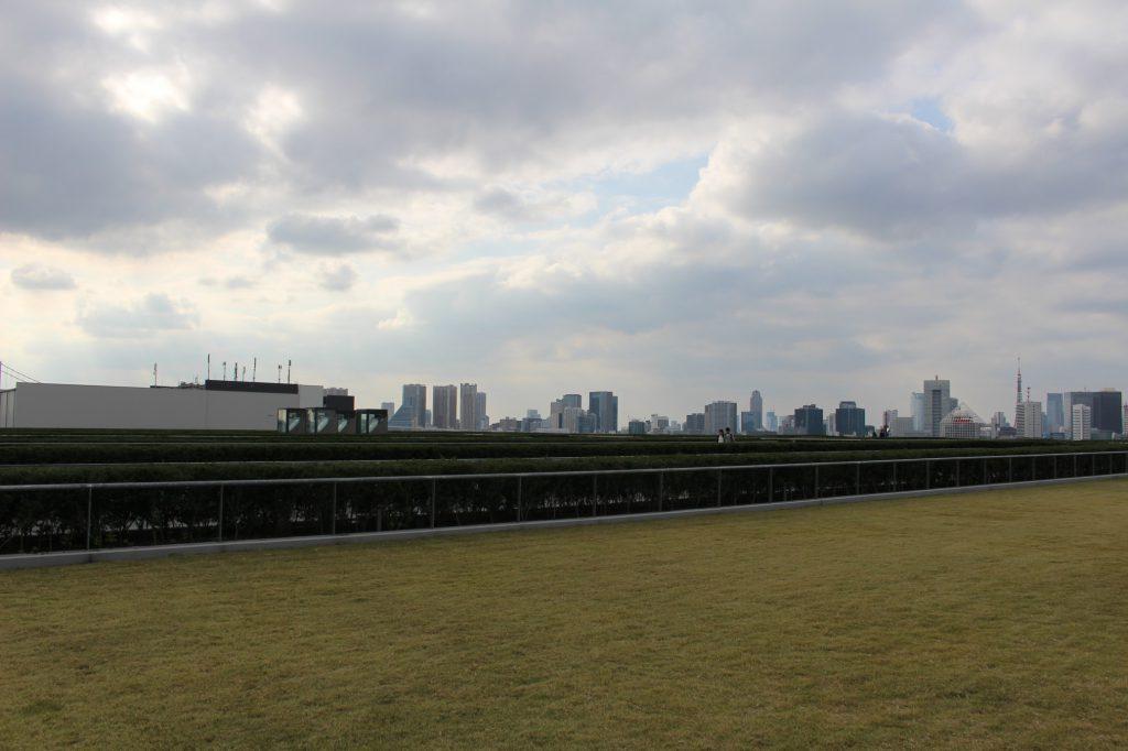 豊洲市場の屋上には広大な緑地が広がっています!キレイ!