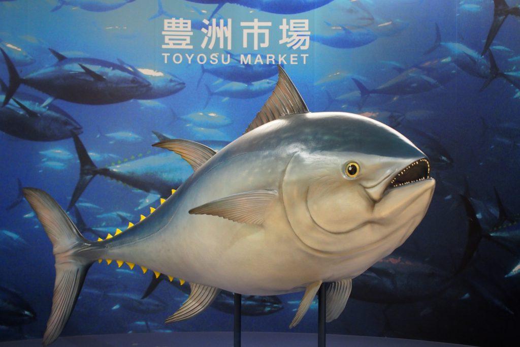 豊洲市場 巨大マグロの展示
