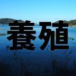 【プロが解説】養殖魚の餌、流通、育て方について!天然との違いは?