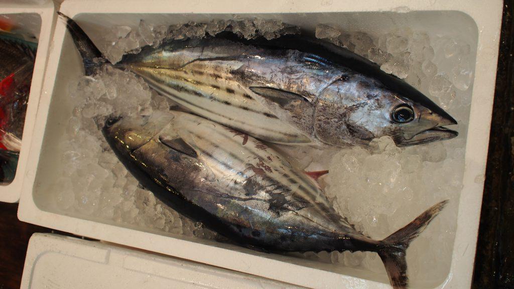 カツオの成魚は1箱に2尾入っている場合も多いが、マグロの成魚は1箱につき1尾