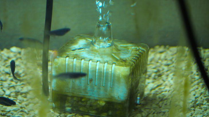 水槽でのメダカ飼育におすすめのフィルターは?初心者は投げ込み式フィルターが安値で使いやすい!