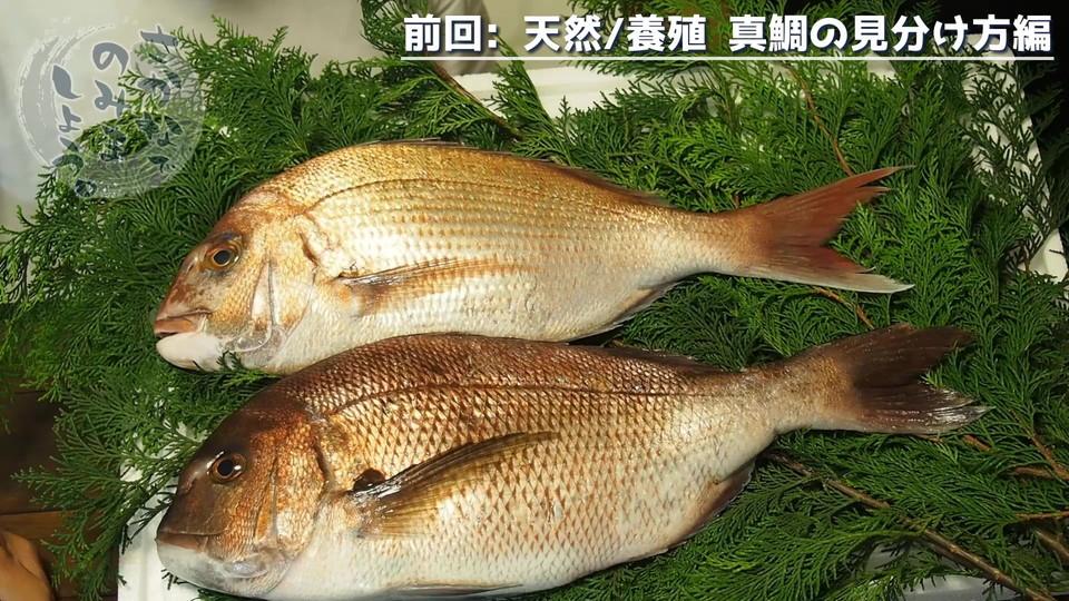 上が天然真鯛、下が養殖真鯛