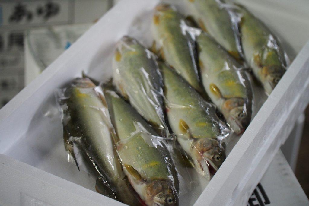豊洲市場にも多く流通している鮎。高知県産は少ないかも