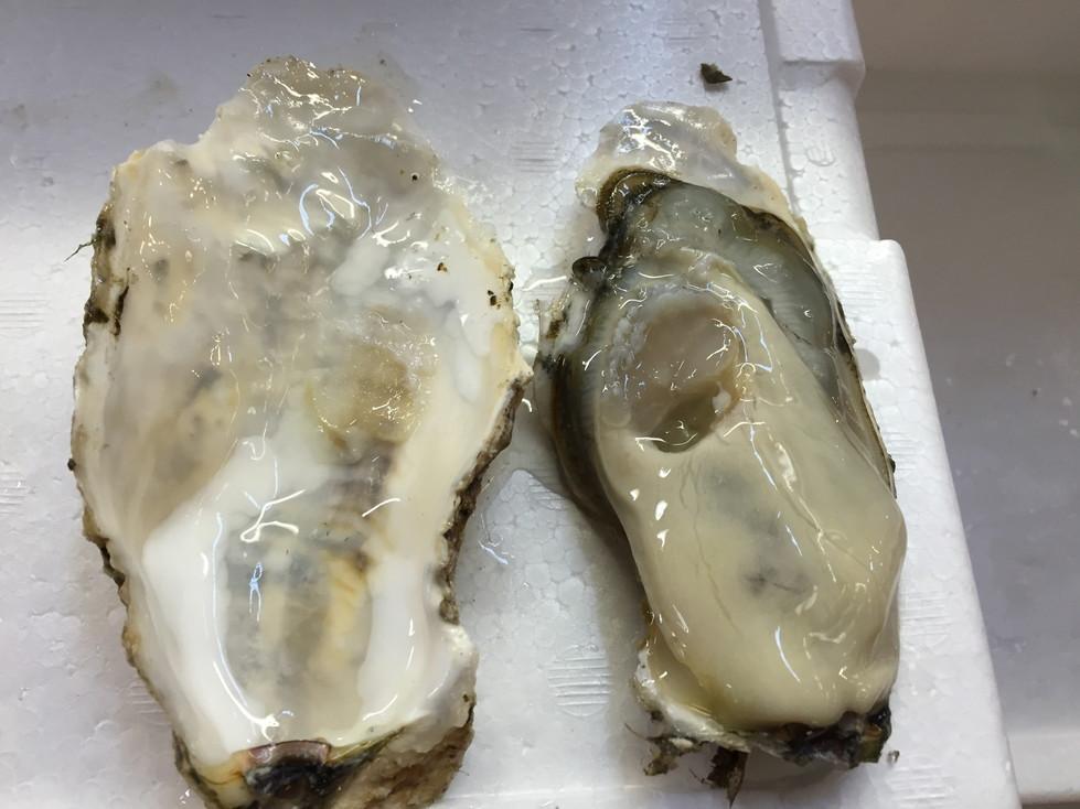 タコは牡蠣にも豊富に含まれる亜鉛がたっぷり