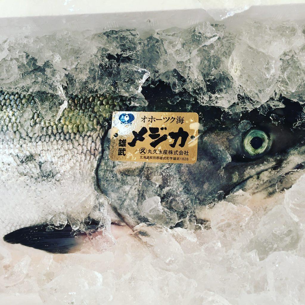 時鮭はメジカやトキシラズなど別名がたくさん